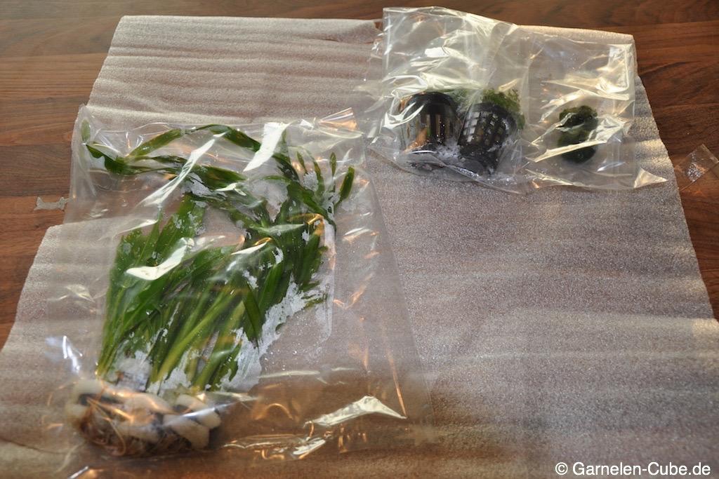 aquariumpflanzen online kaufen meine erfahrung garnelen cube. Black Bedroom Furniture Sets. Home Design Ideas
