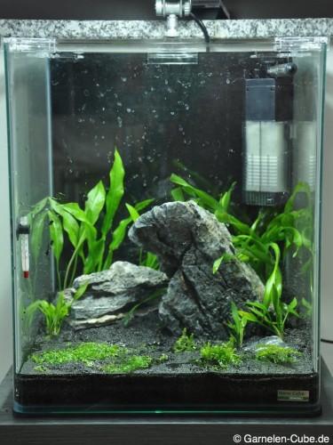 Nano Cube Pflanzen einrichten