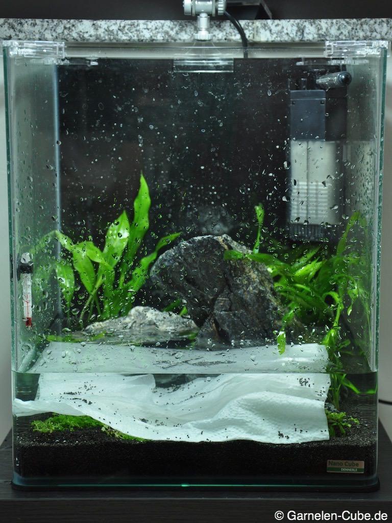 Nano aquarium einrichten perfect aquascaping the art of for Aquarium einrichtung